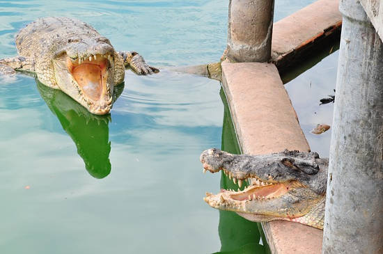 Microsoft & Google as crocs